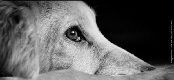 Botti: gli ultimi giorni dell'anno possono essere molto tristi per gli animali.