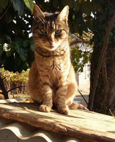 gatto-buonarroti-400-wa0026