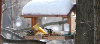 EVIDENZA-Uccellini al ristoro 210