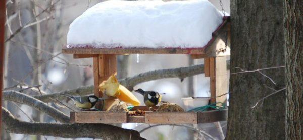 Emergenza freddo: aiutiamo gli uccelli selvatici