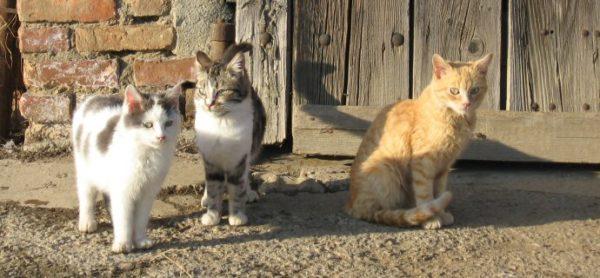 AlimentAnimali si fa in quattro! Sabato 18 febbraio: Giornata Nazionale della Raccolta Cibo con Maxi Zoo.
