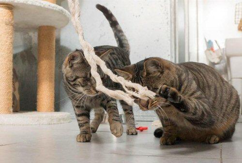 pablo e pedro-festa gatti-NS