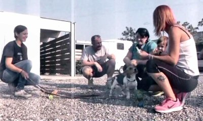 canile monza-beagle-NS