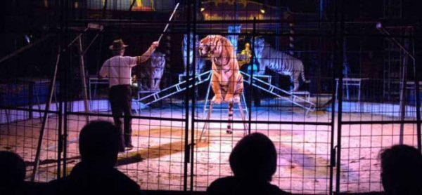 Sabato 11 marzo: banco contro il circo con gli animali.