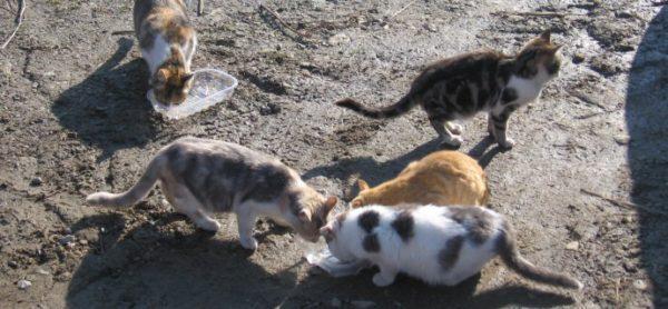 Sabato 11 marzo torna la raccolta alimentare all'OasiPet di Seregno