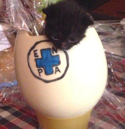 NS-uovo bianco gattino nero-WA0019