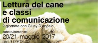 evidenza-2017_3 Giusy D'Angelo