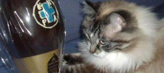 evidenza uova Enpa monza con gatto
