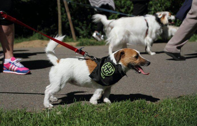 Attenzione Guard Golden Retriever in servizio Segno Metallo Avvertimento cane porta cancello Pet