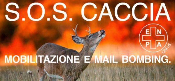 SOS caccia: mobilitazione e mail bombing. Passiamo all'azione!