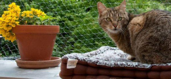 Attenzione caduta gatti!