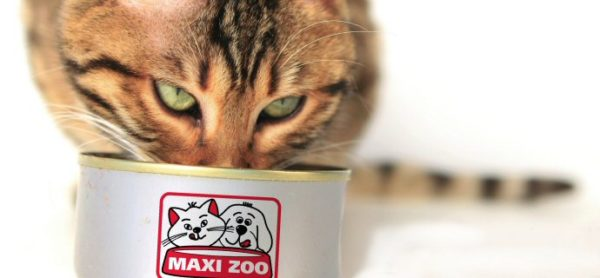 Sabato 28 ottobre: raccolta alimentare al Maxi Zoo di Brugherio.