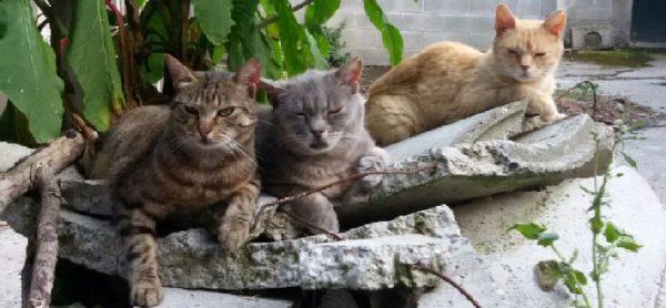 Sabato 2 dicembre, nuova raccolta al Maxi Zoo di Brugherio per le colonie feline.