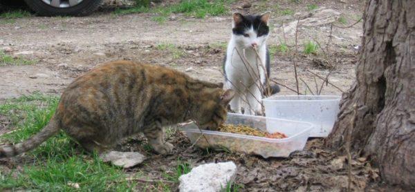Sabato 11 novembre ENPA torna al Maxi Zoo di Brugherio per raccogliere cibo per le colonie feline.