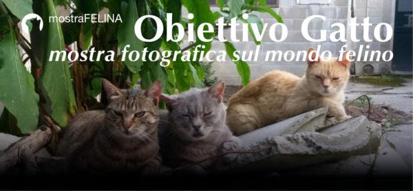 """""""Obiettivo Gatto"""": mostra fotografica, 17/18 febbraio al rifugio di Monza."""