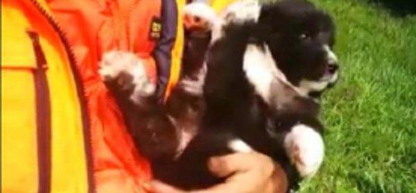 Cani gettati come rifiuti: uno ce la fa, l'altro no