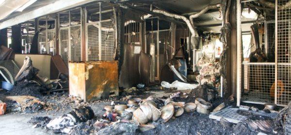 Incendio nel canile ENPA di Como, morti cinque cani. Due dei sopravvissuti ora sono al canile di Monza.