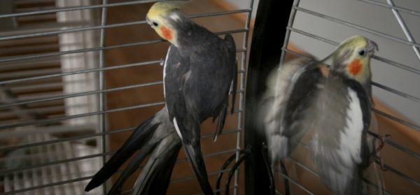 Un appello … ornitologico!