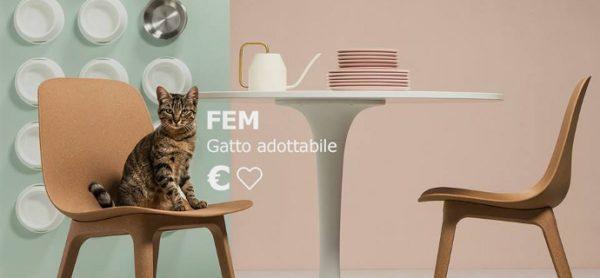 Ikea, ancora una volta dalla parte degli animali