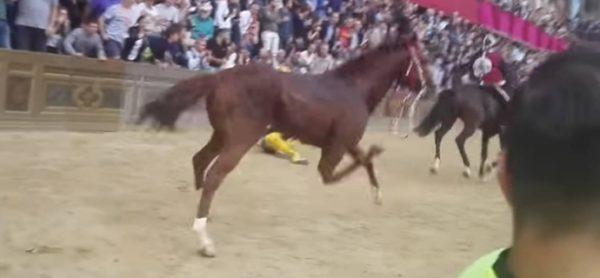 Palio di Siena, muore un altro cavallo. ENPA presenta denuncia in Procura.