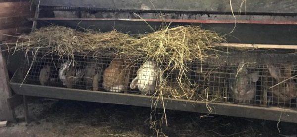 Monza: ovile abusivo, scatta il maxi blitz