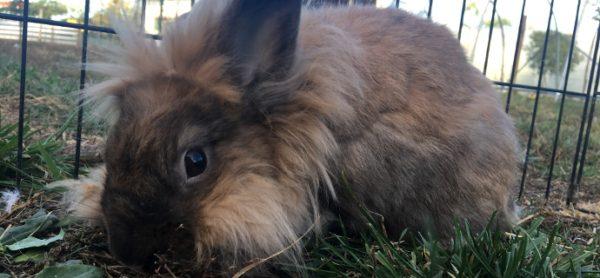 Conigli e roditori: ci siamo anche noi!
