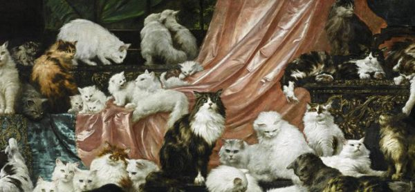 Eventi per la Giornata Mondiale del Gatto