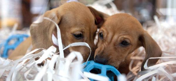 Una petizione per bloccare la vendita di animali nei negozi