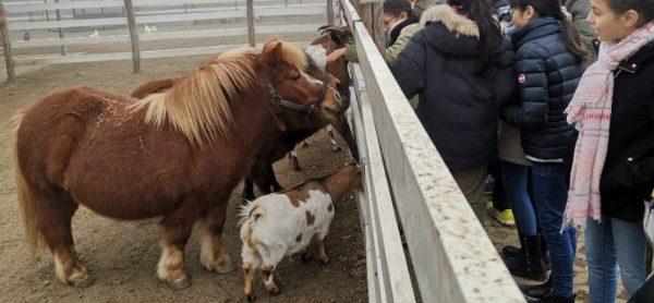 Collegio San Giuseppe e ENPA, due modi diversi di insegnare il rispetto per gli animali.