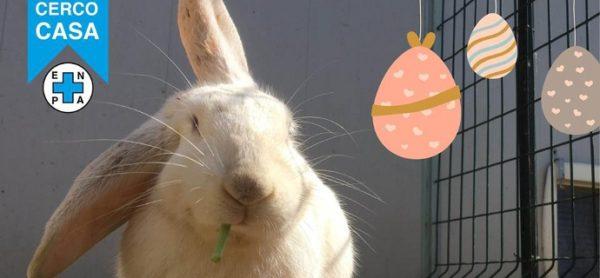 """Concorso fotografico """"Conigli alla Riscossa"""" - aperte le votazioni!"""