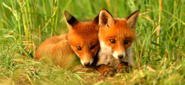 11-12 maggio: ENPA in piazza per il mese per la Fauna selvatica