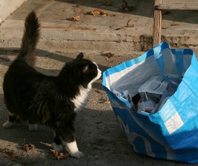 Isaoa per adulti bambini uomini morbida borsa termica per lavoro borsa termica per il pranzo con piccolo gatto e unicorno donne a prova di perdite picnic impermeabile scuola