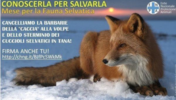 """1 maggio: prende il via il """"Mese della Fauna Selvatica"""""""