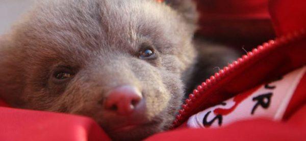 L'orsetto più triste del mondo ha bisogno di noi!