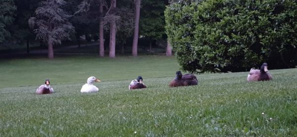 Animali selvatici aggrediti alla Villa Reale, ma quando finirà??