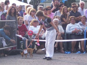 Benedizione animali 2012