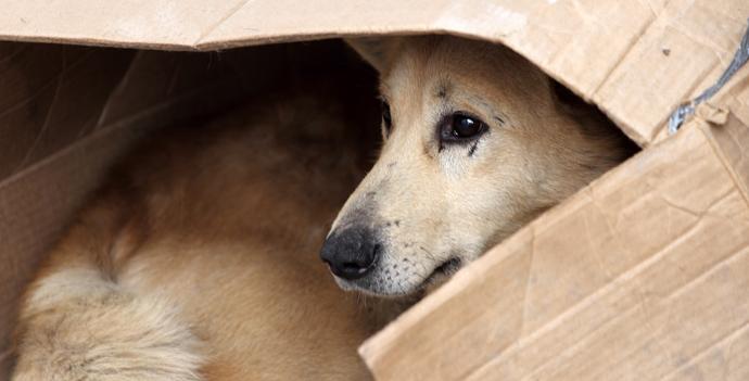 Risultati immagini per enpa cani